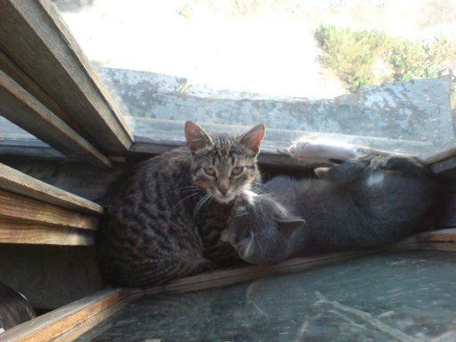 cats_small_1.jpg