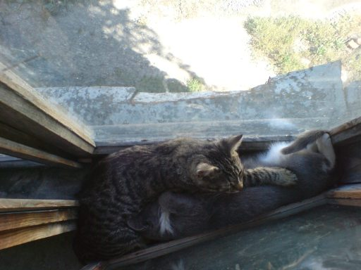 cats_small_2.jpg