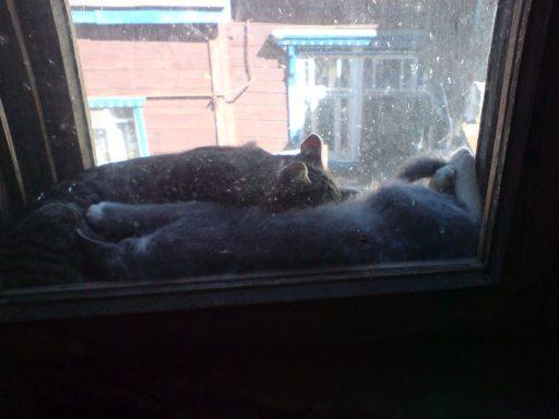 cats_small_4.jpg