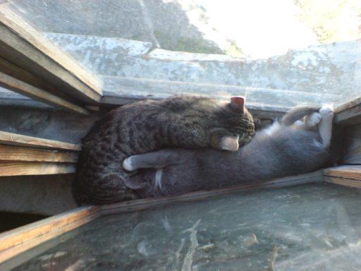 cats_small_5.jpg